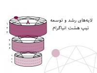لایههای رشد و توسعه تیپ هشت انیاگرام